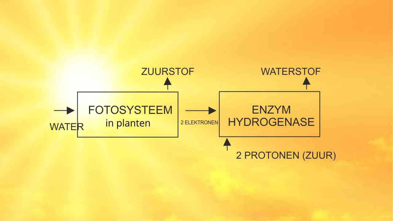 Granen produceren waterstofgas