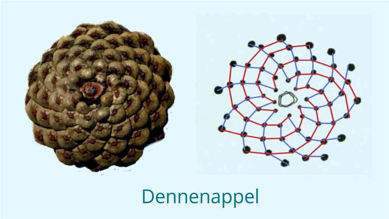 Geomatrie in de natuur